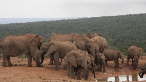 Suzuki_Addo-Elephant-National-Park.jpg