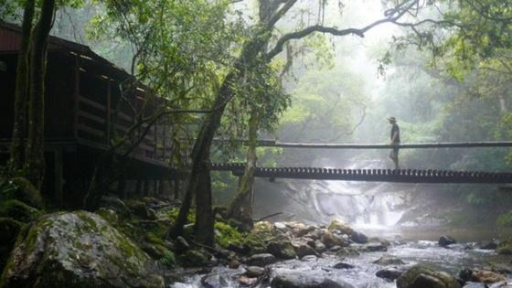 Suzuki_Woodbush_Forest_Reserve (1).jpg